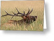 Elk Bugle Greeting Card