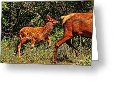 Elk Fawn Greeting Card