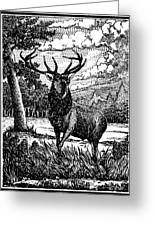 Elk From Glass Greeting Card