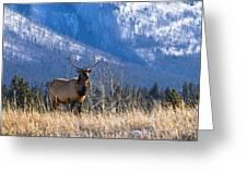 Elk In Forest, Banff National Park Greeting Card