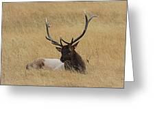 Elk In The Meadow Greeting Card