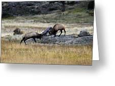Elks Rutting Greeting Card