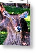 Ellipsis Waterbuck Greeting Card
