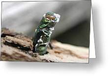 Emerging Ash Borer With Fungus Greeting Card
