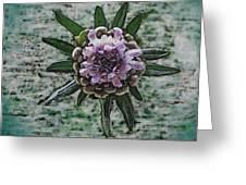 Emerging Pincushin Greeting Card