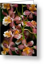 Emma's Orchid Greeting Card