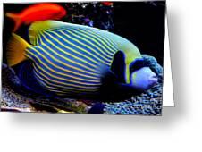 Emperor Angelfish Greeting Card