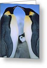 Emperor Penguins Aptenodytes Forsteri Greeting Card