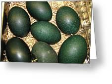 Emu Eggs Greeting Card