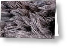 Emu Feathers Greeting Card