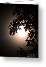 Enchanted By Moonlight Greeting Card