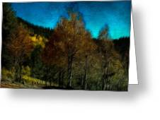 Enchanted Evening In The Forest Greeting Card