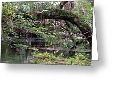 Enchanted Forrest IIi Greeting Card