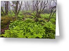 Enchanted Woodland Forest In Fog Blue Ridge Parkway In North Carolina Greeting Card