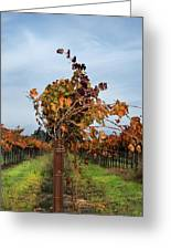 End Of The Vineyard Row Greeting Card