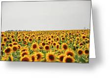 Endless Field Of Dreams Greeting Card