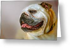 English Bulldog Willie In Profile Greeting Card by Dorothy Walker