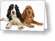 English Cocker Spaniels Greeting Card