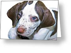 English Pointer Puppy Greeting Card