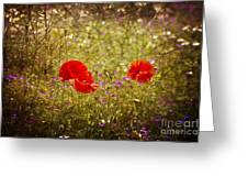 English Summer Meadow. Greeting Card