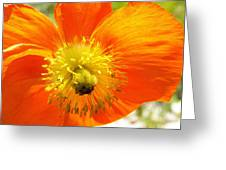 Enter The Orange Poppy Greeting Card