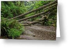 Entrance To Fern Canyon Greeting Card