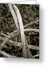 Entwined - Mono Greeting Card