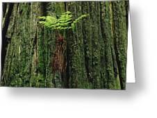Epiphytic Fern Growing On Redwood Greeting Card