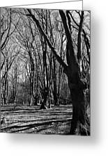 Epping Forest Greeting Card
