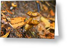 Epworth Mushrooms Greeting Card