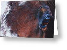 Equine 1 Greeting Card by Elena Kolotusha