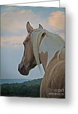 Equine Study - Paint Horse Greeting Card