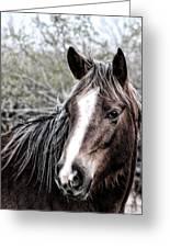 Equine Trance Greeting Card