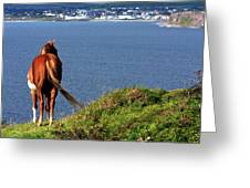 Equine View  Greeting Card