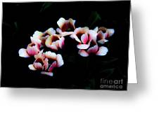 Ethereal Tulips 2 Greeting Card