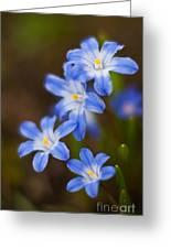 Etoiles Bleus Greeting Card