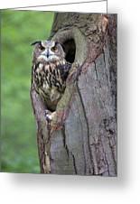 Eurasian Eagle-owl Bubo Bubo Looking Greeting Card