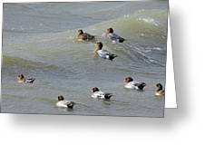 Eurasian Wigeons Greeting Card