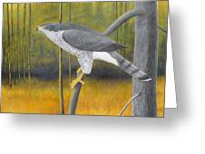 European Goshawk Greeting Card
