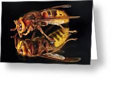 European Hornet On A Mirror Greeting Card