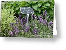 European Markets - Lavender Greeting Card