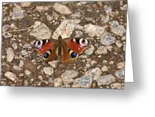 European Peacock Greeting Card