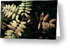 European Rowan Greeting Card