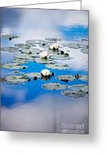 European White Waterlily Greeting Card