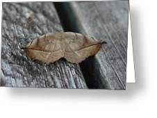 Eutrapela Clemataria Greeting Card by Sean Green