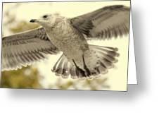 Evangeli-gull Greeting Card by Ed Smith