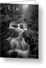 Even Flow 4.1 Bw Greeting Card