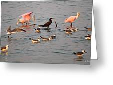 Evening Activity In The Bay Greeting Card