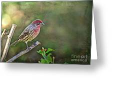 Evening Finch Blank Greeting Card Greeting Card