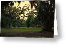 Evening In The Mossy Oaks Greeting Card